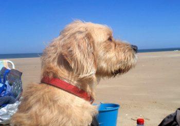 Ferienhaus Le Péré – Ferien mit dem Hund